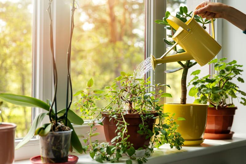 planten water geven